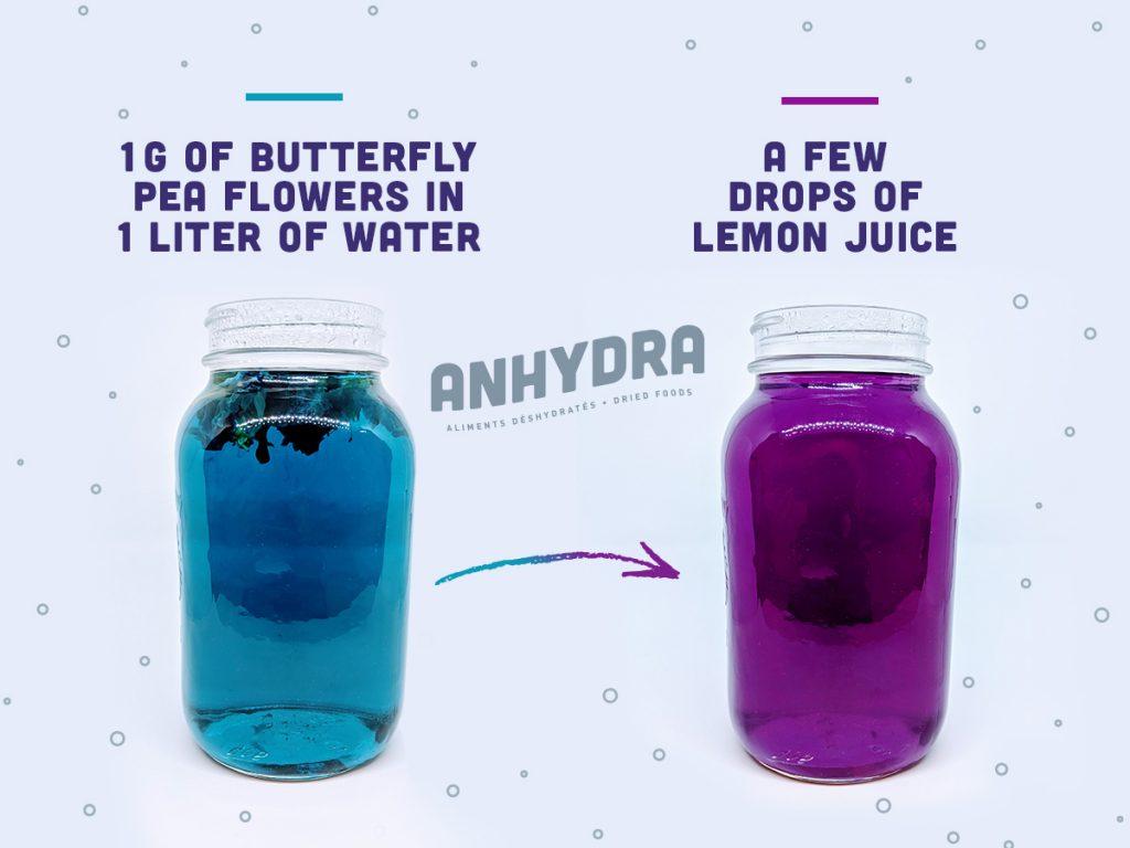 Butterfly pea flowers blue to purple